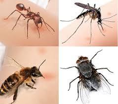 Phun diệt côn trùng